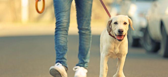 vivre à Toulouse avec son chien